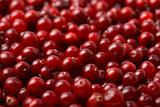 red cranberries background