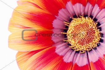 Bright orange and red flower