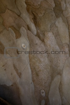 Guava wood background