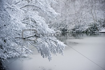 Branch over frozen lake
