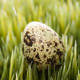Egg on grass.