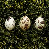 Eggs on grass.
