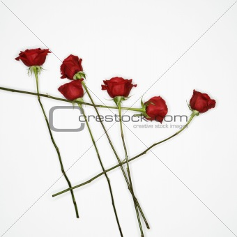 Red roses on white.