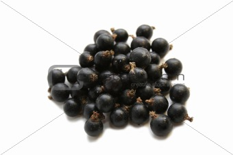 Black Currant Berry