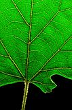 green leaf bottom