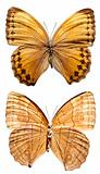 Howqua Butterfly (upper and lower)