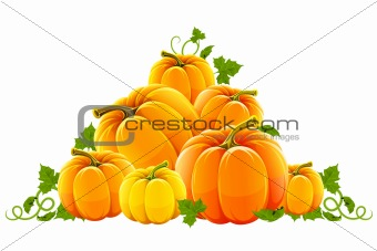 hill harvest of orange ripe pumpkins