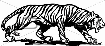 Tiger, vector illustration
