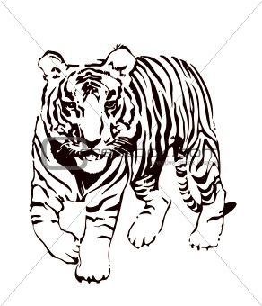 Tiger, vector illustration