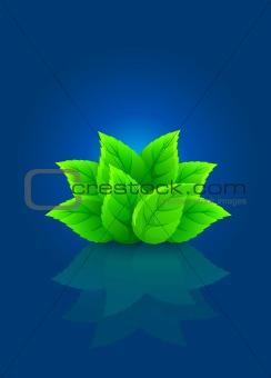 group of green leaf on blue background