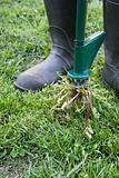 Man in rubber boots pulling weeds