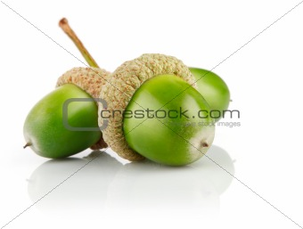 three green acorn fruits isolated