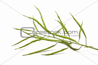 Green Oilseed Pods