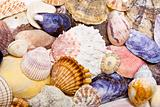 Sea Shell Background Texture