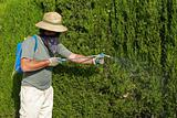 Gardener spraying pesticide