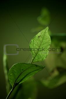Green leaf against dark background