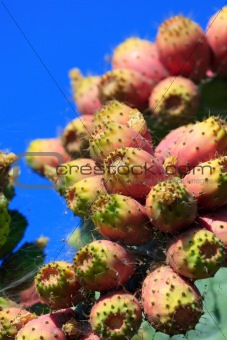 Red prickly pear cactus fruits