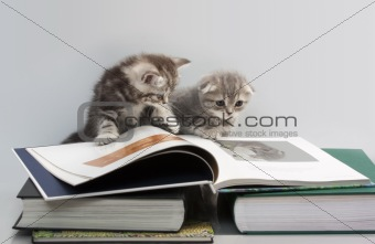 cats are considering a book