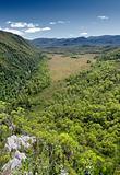 Tasmania state forest