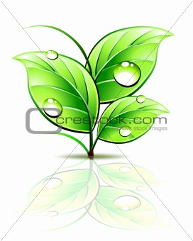 Branch of sprout with dew on green leaves. Vector