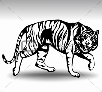 Aggressive tiger. Vector