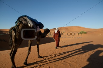 Camel walking through the desert