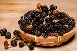 Wild Fresh Blackberries.