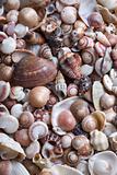 Cockleshell beach surface