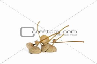 Acorn Helms
