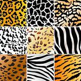 wild patterns