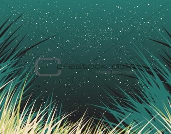 Nightgrass