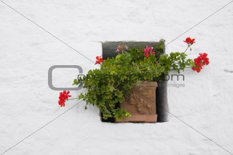 Flowerpot in a window. Alberobello. Apulia.
