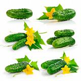 set cucumber fruits with leaves
