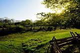 Sun shining through trees on a farm