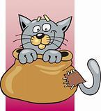 Cat in sack