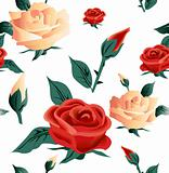 Roses seamless on white background. Vector
