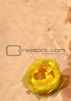 Old paper with rose