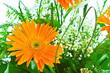 Orange gerbera flower agaisnt green blurred background