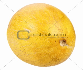 Single ripe yellow melon
