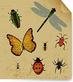 The dried insects on old book sheet. Vector