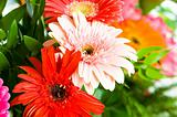 Gerbera flowers agaisnt green blurred background