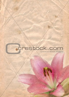 Old paper with pink lily