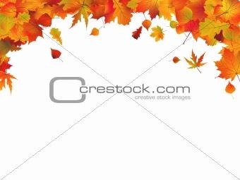 Autumn leafs(5).jpg