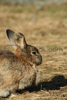 Close up of a rabbit