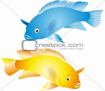 Cichlidae vector