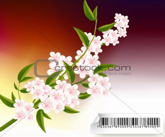 blossoms Illustration