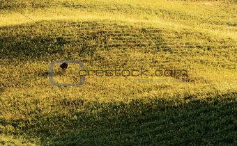 Agriculture scenery