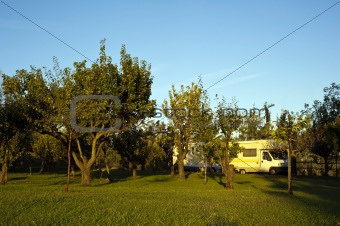 campers in an orchard