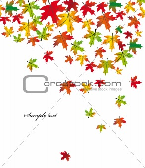 Autumn falling leaves. Vector