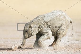 Baby elephants play